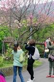 2013陽明山賞花趣:IMGP5691.JPG