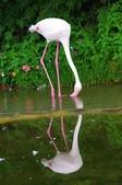 2012動物園:IMGP9526.JPG