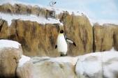 2012動物園:IMGP9639.JPG