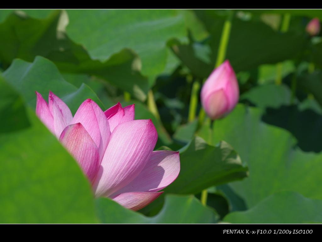 2011台大農改場:IMGP0980.jpg