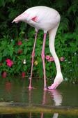 2012動物園:IMGP9532.JPG