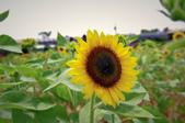 向陽農場:IMGP1526.jpg