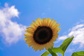 向陽農場:IMGP1539.jpg