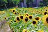 向陽農場:IMGP1545.jpg