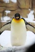 2012動物園:IMGP9653.JPG