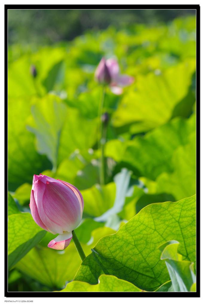 2011台大農改場:IMGP1078.jpg