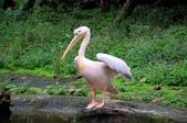 2012動物園:IMGP9666.JPG