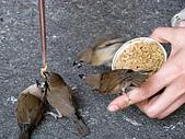北埔烤肉&薰衣草森林(20070728):市場