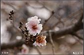 京阪神day8:DSC08246.JPG