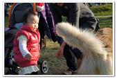 20130106小安&芒果在林默娘公園:DSC08340.JPG