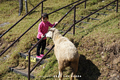 20151211-12 奧萬大_羊角村_清境農場:
