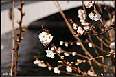 京阪神day6:DSC07845.JPG