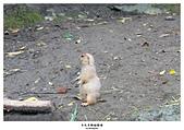 20140814木柵動物園: