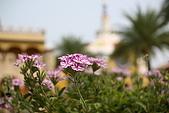 摩爾花園:IMG_7196.JPG