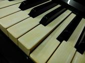 平面及新聞媒體報導 - 世國琴行:象牙琴鍵2.jpg