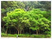 20130317_二叭子植物園:IMG_4935.JPG