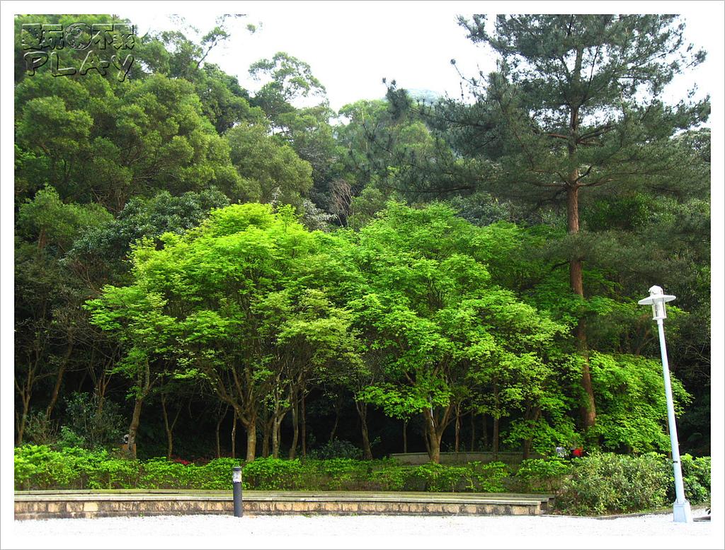 20130317_二叭子植物園:IMG_4936.JPG