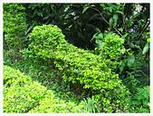 20130317_二叭子植物園:IMG_4967.JPG