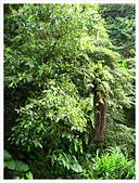 20130317_二叭子植物園:IMG_4913.JPG