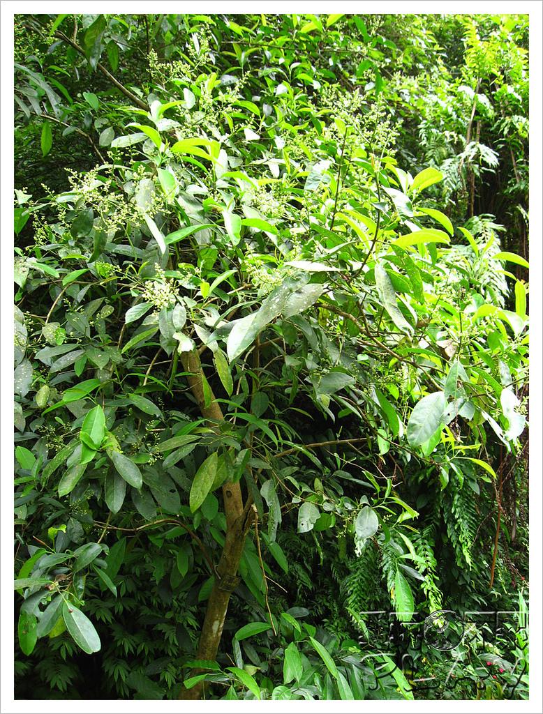 20130317_二叭子植物園:IMG_4914.JPG
