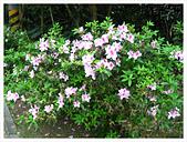 20130317_二叭子植物園:IMG_4969.JPG