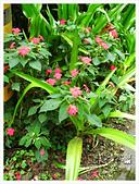 20130317_二叭子植物園:IMG_4915.JPG
