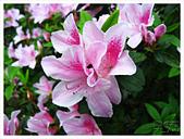 20130317_二叭子植物園:IMG_4970.JPG