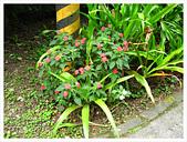 20130317_二叭子植物園:IMG_4916.JPG