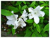 20130317_二叭子植物園:IMG_4971.JPG
