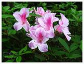 20130317_二叭子植物園:IMG_4973.JPG