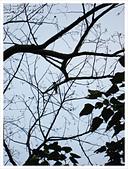 20130317_二叭子植物園:IMG_4951.JPG