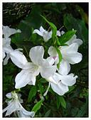 20130317_二叭子植物園:IMG_4975.JPG