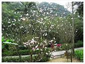 20130317_二叭子植物園:IMG_4891.JPG