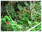 20130317_二叭子植物園:IMG_4956.JPG