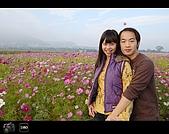 971123 新社花海節:DSC_0071.jpg