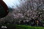 980308 大屯花卉農場、天元宮賞櫻花:DSC_0051.jpg