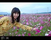 971123 新社花海節:DSC_0017.jpg
