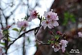 980308 大屯花卉農場、天元宮賞櫻花:DSC_0030.jpg