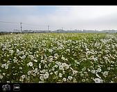 971123 新社花海節:DSC_0089.jpg