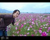 971123 新社花海節:DSC_0020.jpg