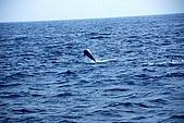 070415-龜山島賞鯨豚:發現海豚囉~