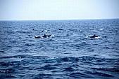 070415-龜山島賞鯨豚:似乎也在歡迎我們的到來