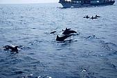 070415-龜山島賞鯨豚:好大一群啊~