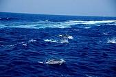 070415-龜山島賞鯨豚:海面上就有上百隻海豚喔~
