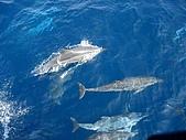 070415-龜山島賞鯨豚:游到船邊來了~