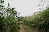 061202-鎮西堡與神木:林道路況