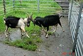 070811-大東山公司旅遊:參觀牧場