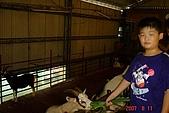 070811-大東山公司旅遊:餵食羊ㄇㄟㄇㄟ