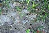 070715-童玩節與福山植物園:地底築巢的蜂