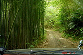 061202-鎮西堡與神木:竹林